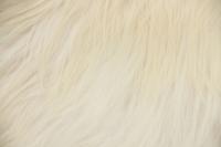 Heidschnucke (weiß)