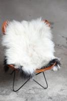 Heidschnucke Weiß mit brauner Unterwolle und dunklem Rand