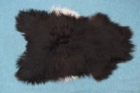 Heidschnucke Schwarz mit weißem Bauch