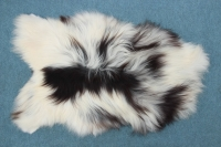 Heidschnucke Bunt (Schwarz-Weiß und Braun-Weiß)